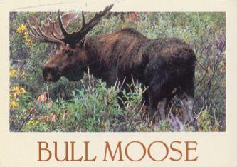 James Jennifer Georgina – Postcard stamped on Monday, August 12, 1991