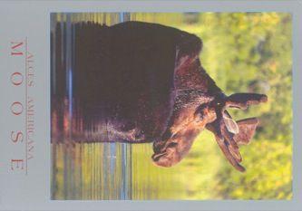 James Jennifer Georgina – Postcard stamped on Wednesday, October 18, 1995